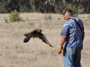 Falconers at Long Ranch